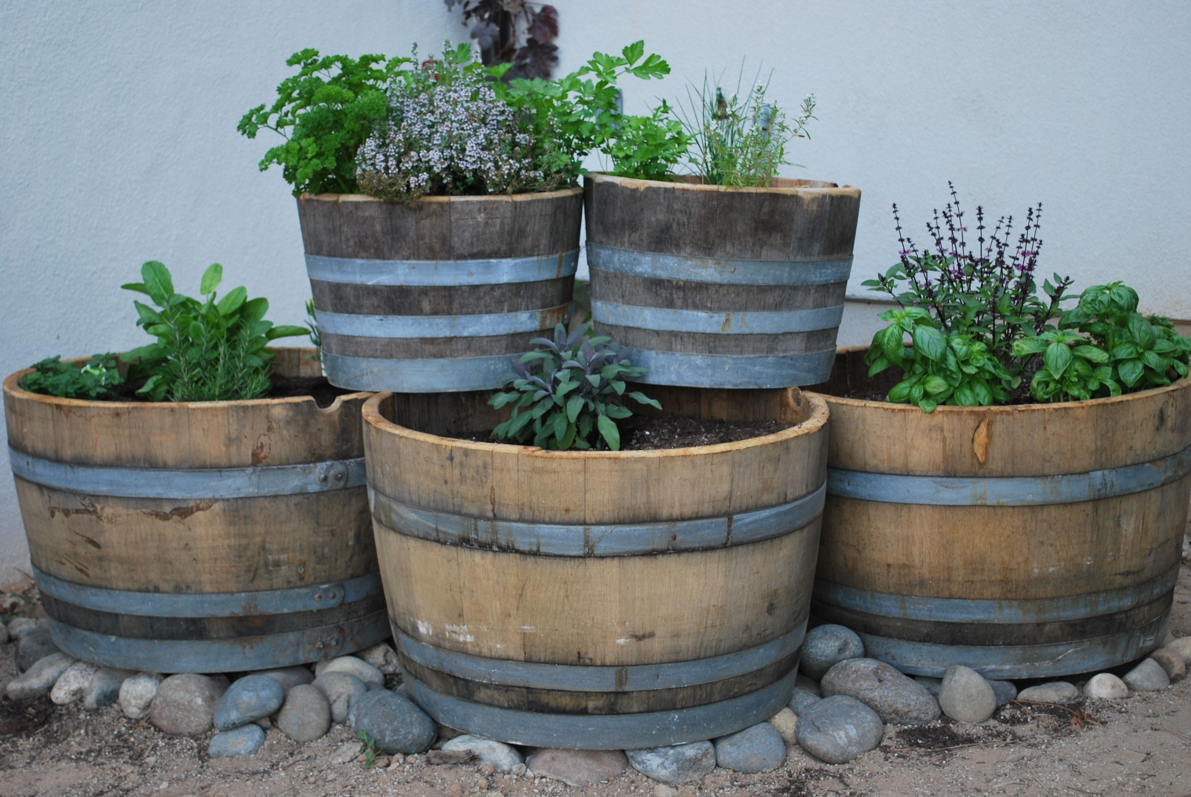 Wine Barrel Planter For Garden : Transplant Lime Tree In Wine .