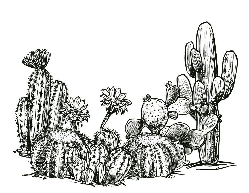 Epingle Sur Cactus