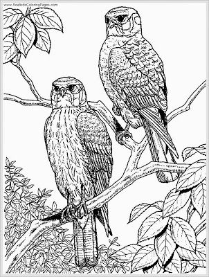 Eagle Coloring Pages For Adult Bird Coloring Pages Adult Coloring Pages Owl Coloring Pages