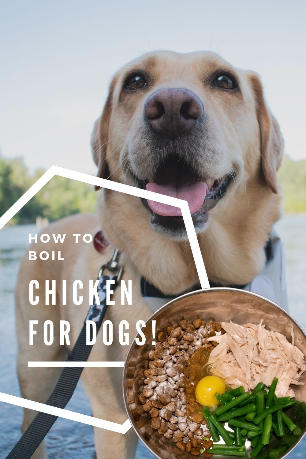 Boiled chicken for dogs recipe with green beans yuna