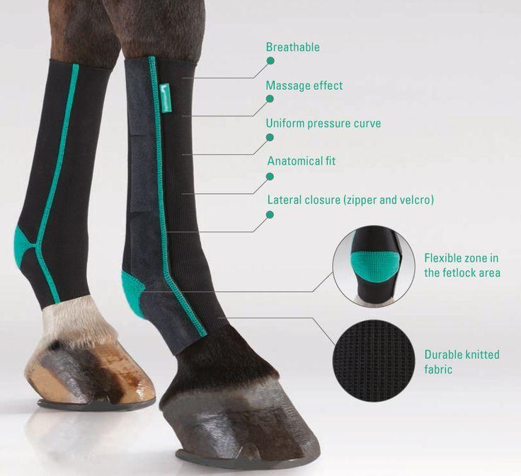 Horses wear compression bandages too