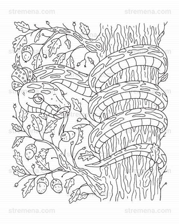 Reptiles Printable Coloring Pages Snake and Lizard Frog
