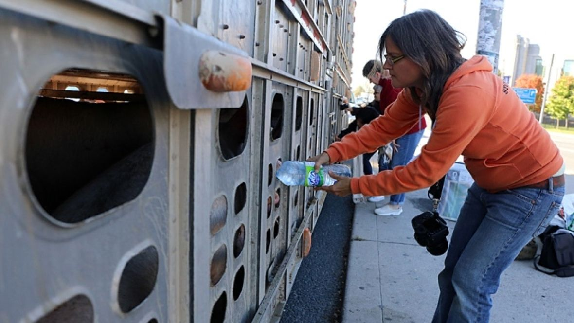 Animal evidence misses the point in Anita Krajnc pig trial, farm groups say