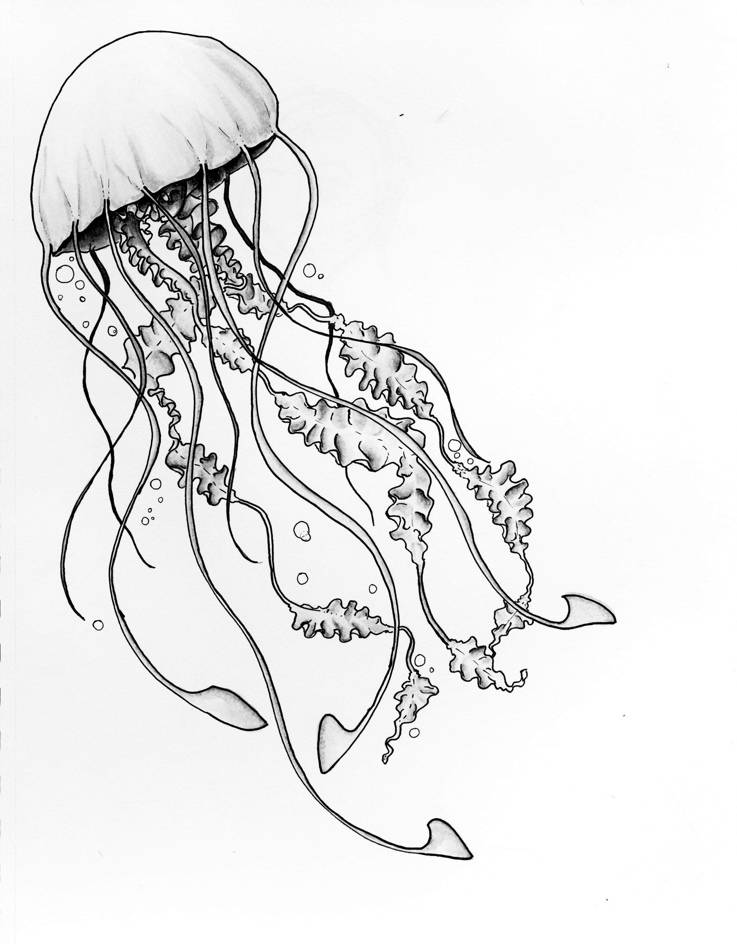 Line Art Jellyfish : Title moon jellyfish media copic marker on paper scale