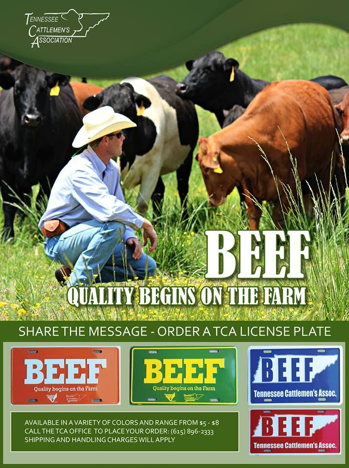A BEEF license plate is a must-have for any Tennessee cattleman or ...