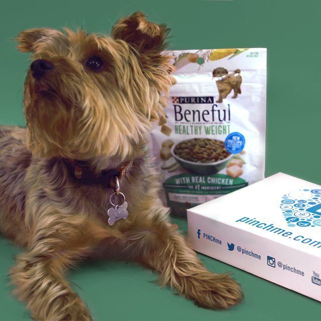 We're so excited for PINCHpups, because free samples of @Beneful Healthy Weight samples will be released on #SampleTuesday! Made with real chicken as the #1 ingredient, it'll keep your dog healthy and strong. That's what we like to hear!