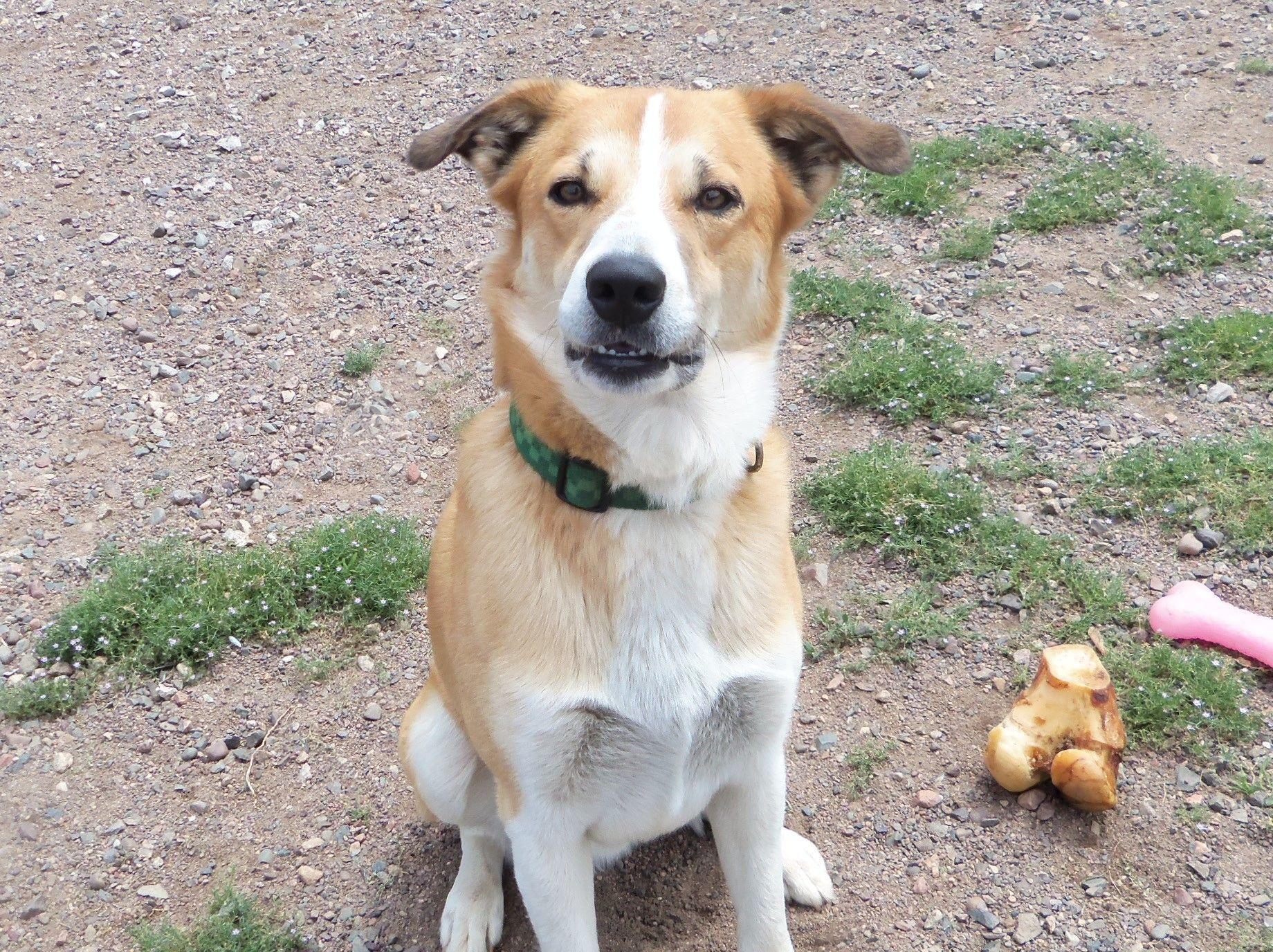 Adopt dugan on humane society dog adoption rescue dogs