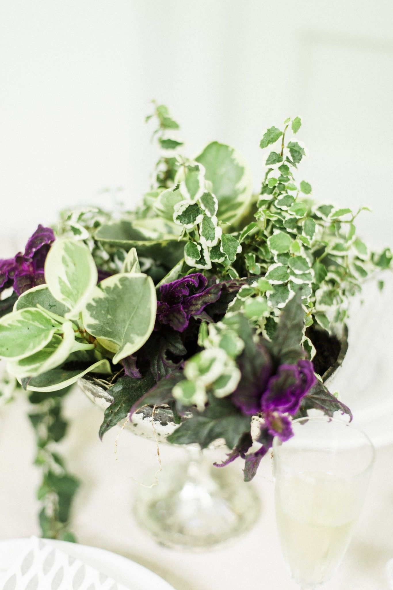Keeping It Green with a dash of purple A spring container