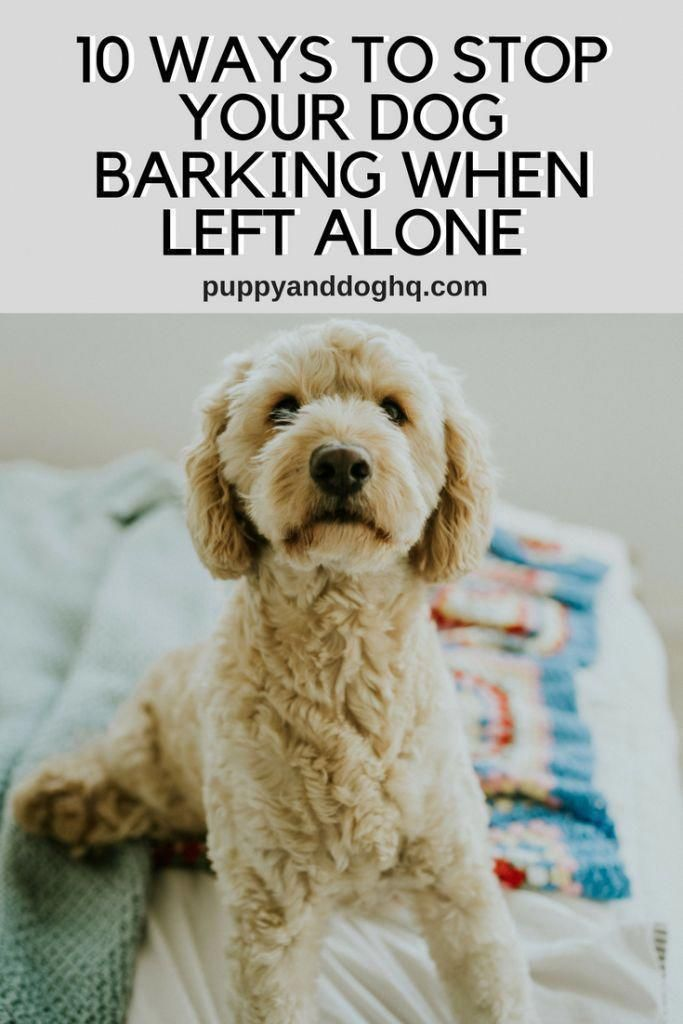Stop Your Dog From Barking When Left Alone With These 10 Dog