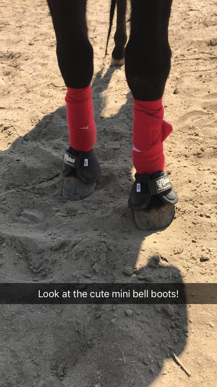 Miniature Horse Bell Boots