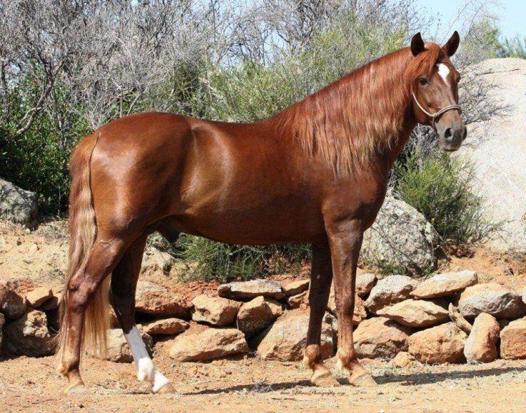 Scr Romanico Dos Horse World Horses Beautiful Horses
