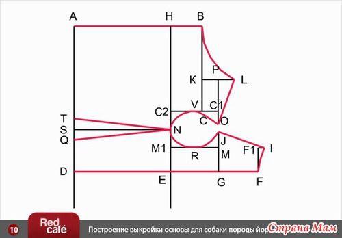 Построение индивидуальной выкройки для собаки (вариант № 2)