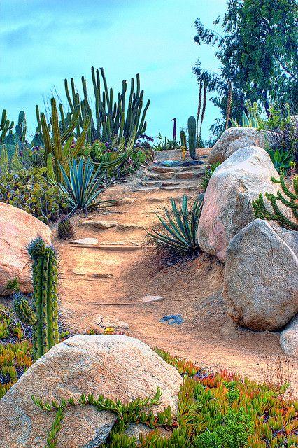 Desert Landscaping Drought Tolerant Landscape Landscape 400 x 300