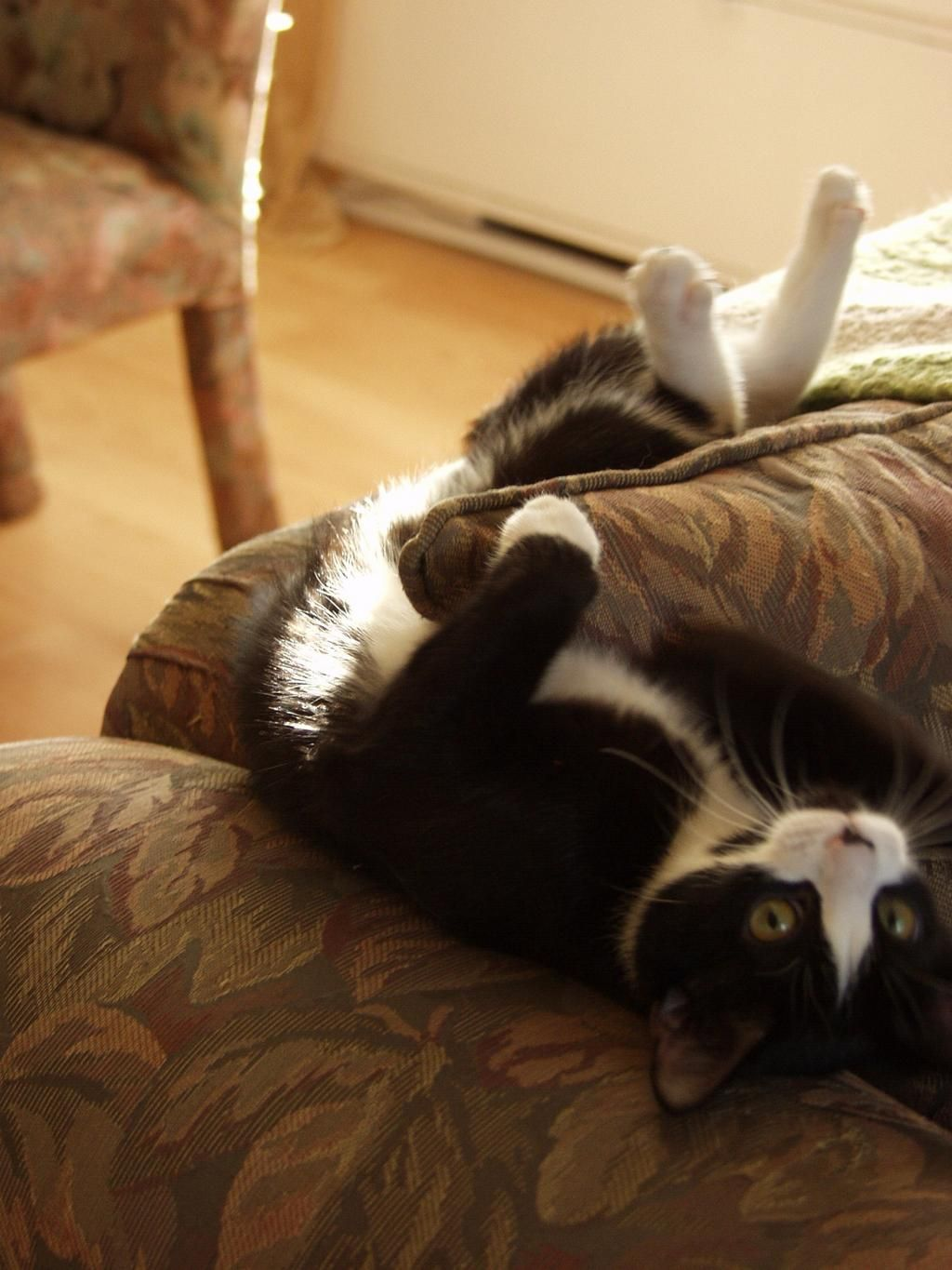 #jellybellyfriday - today I'm celebrating upside down! pic.twitter.com/4p0rn14uf9