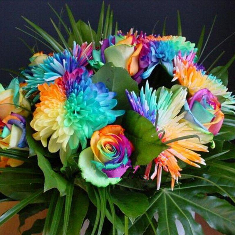Favorable 20Pcs Rainbow Chrysanthemum Flower Seeds Rare Color Home Garden Bonsai Plant