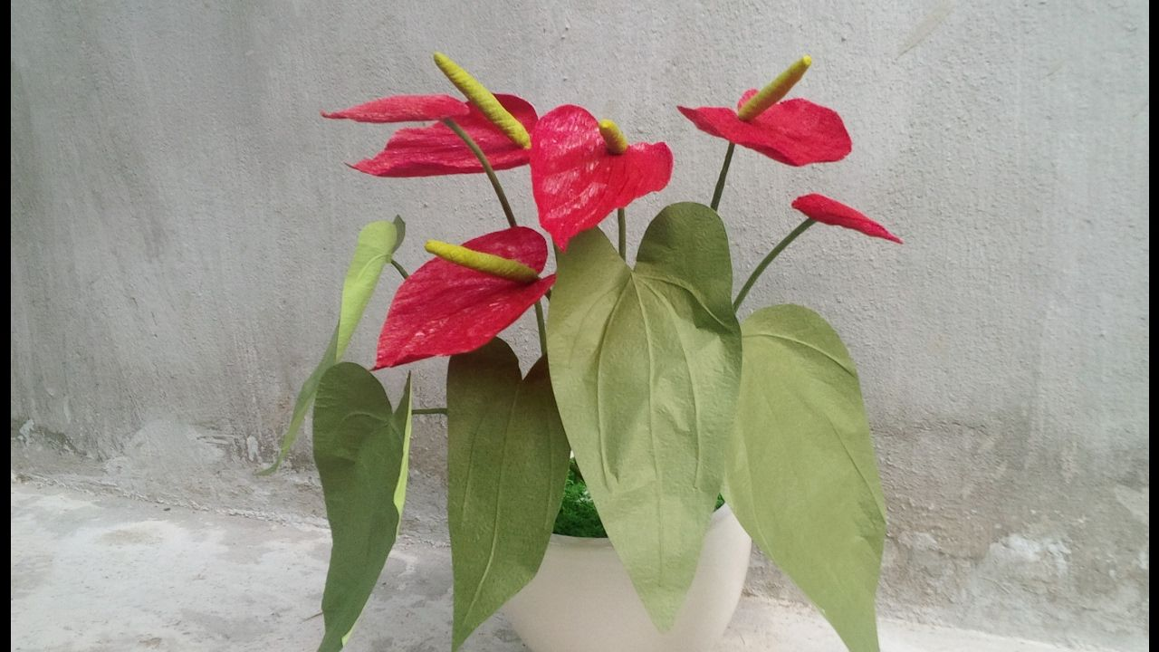 Abc Tv How To Make Anthurium Paper Flower From Crepe Paper Craft