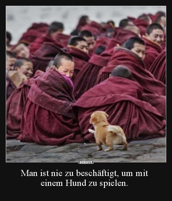 Photo of Nunca estás demasiado ocupado para jugar con un perro … | Fotos graciosas, …