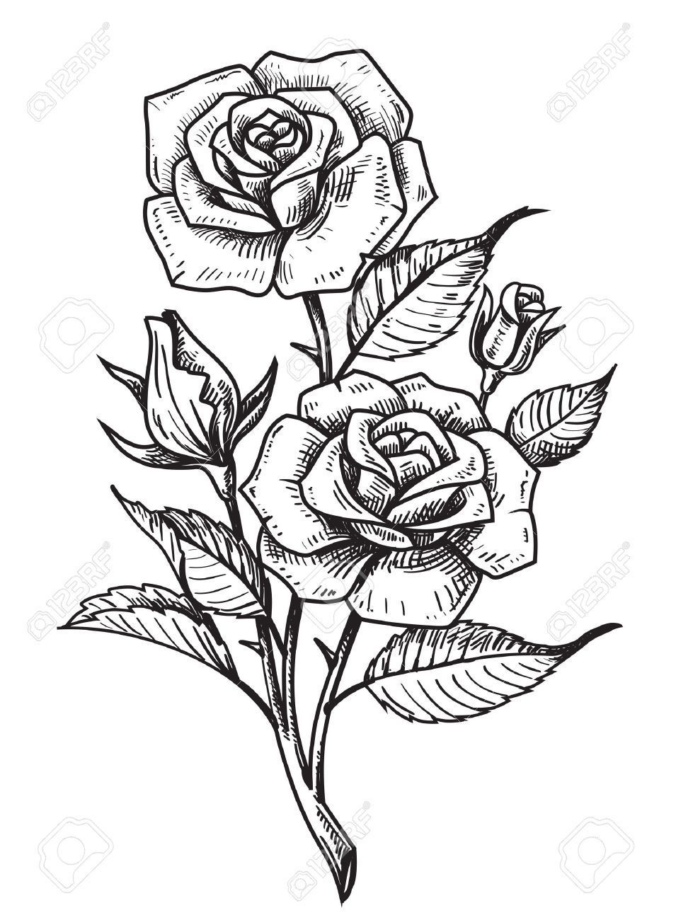 Vector Tattoo Roses With Leaves On White Background In 2020 Rose Drawing Tattoo Roses Drawing Rose Tattoos