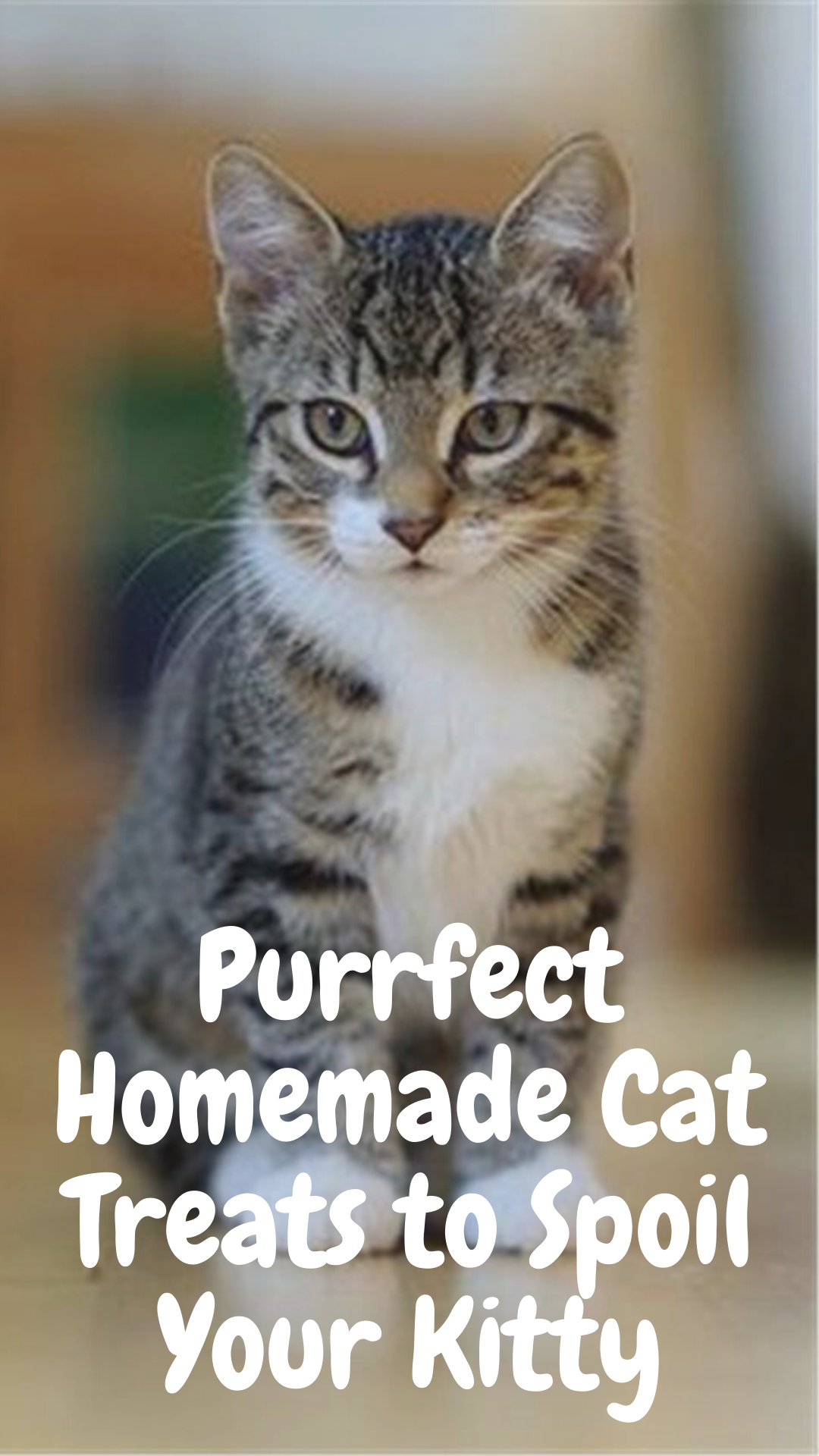 9 Purrfect Homemade Treats For Your Cat Cats Pretty Cats Cat