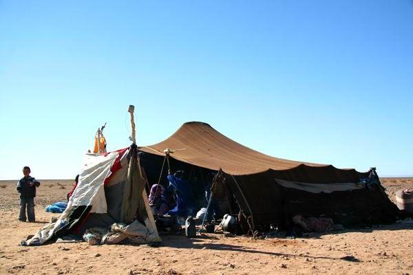 Desert Life Desert Life And Deserts - A hot desert