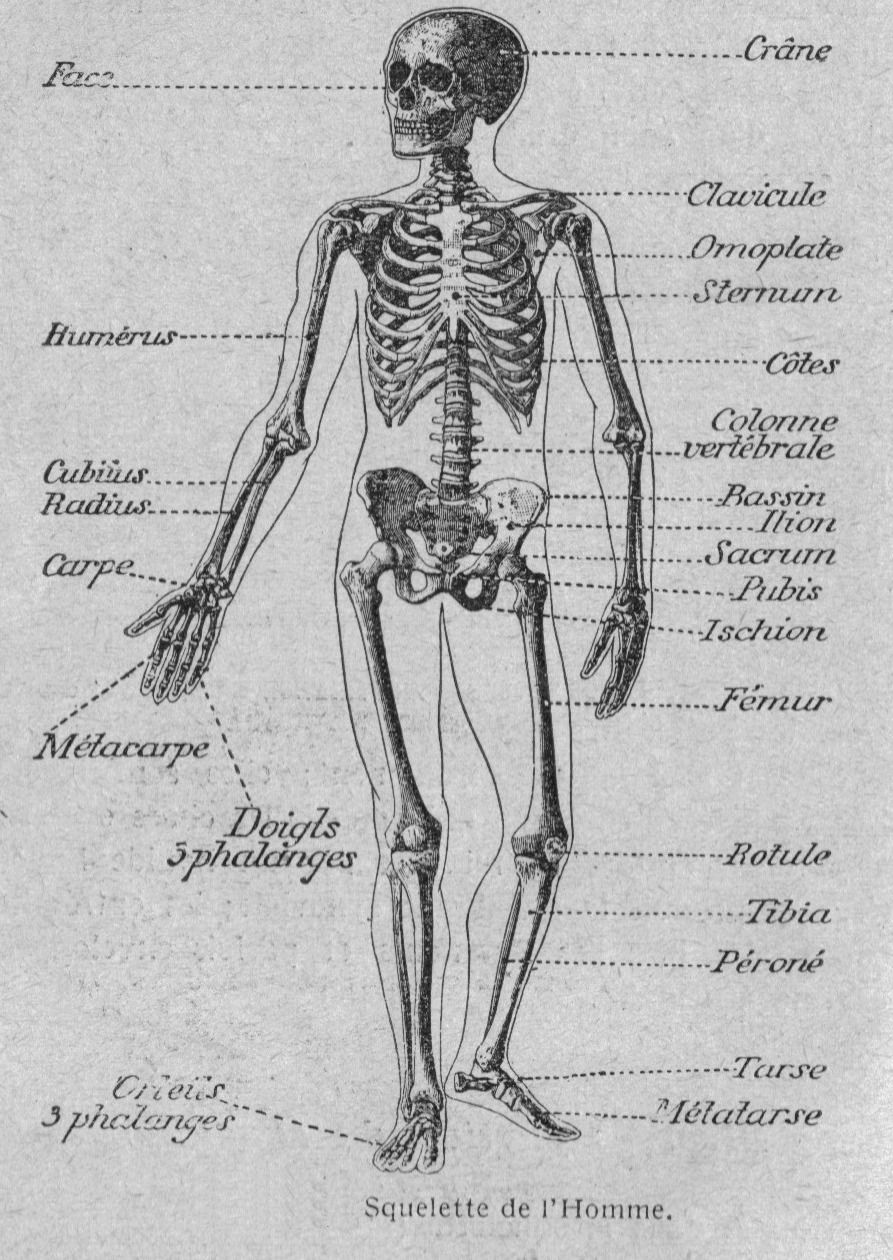 Pin by Aimee Skaer on anatomy | Pinterest | Anatomy, Human body and ...