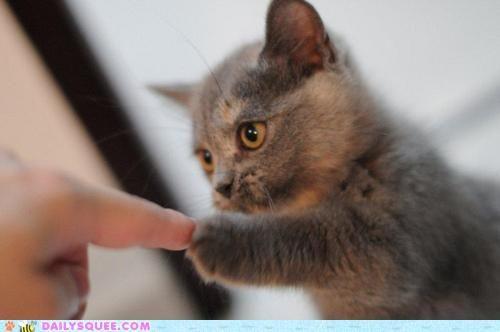 kittennnn!