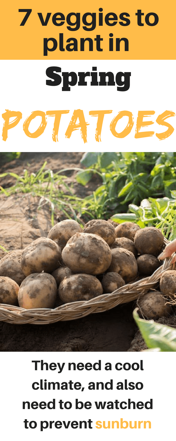 Vegetables To Plant In Spring – 7 Veggies Ready For Spring 400 x 300
