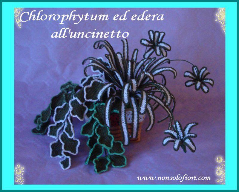 Edera e chlorophytum all 39 uncinetto for Piante grasse uncinetto