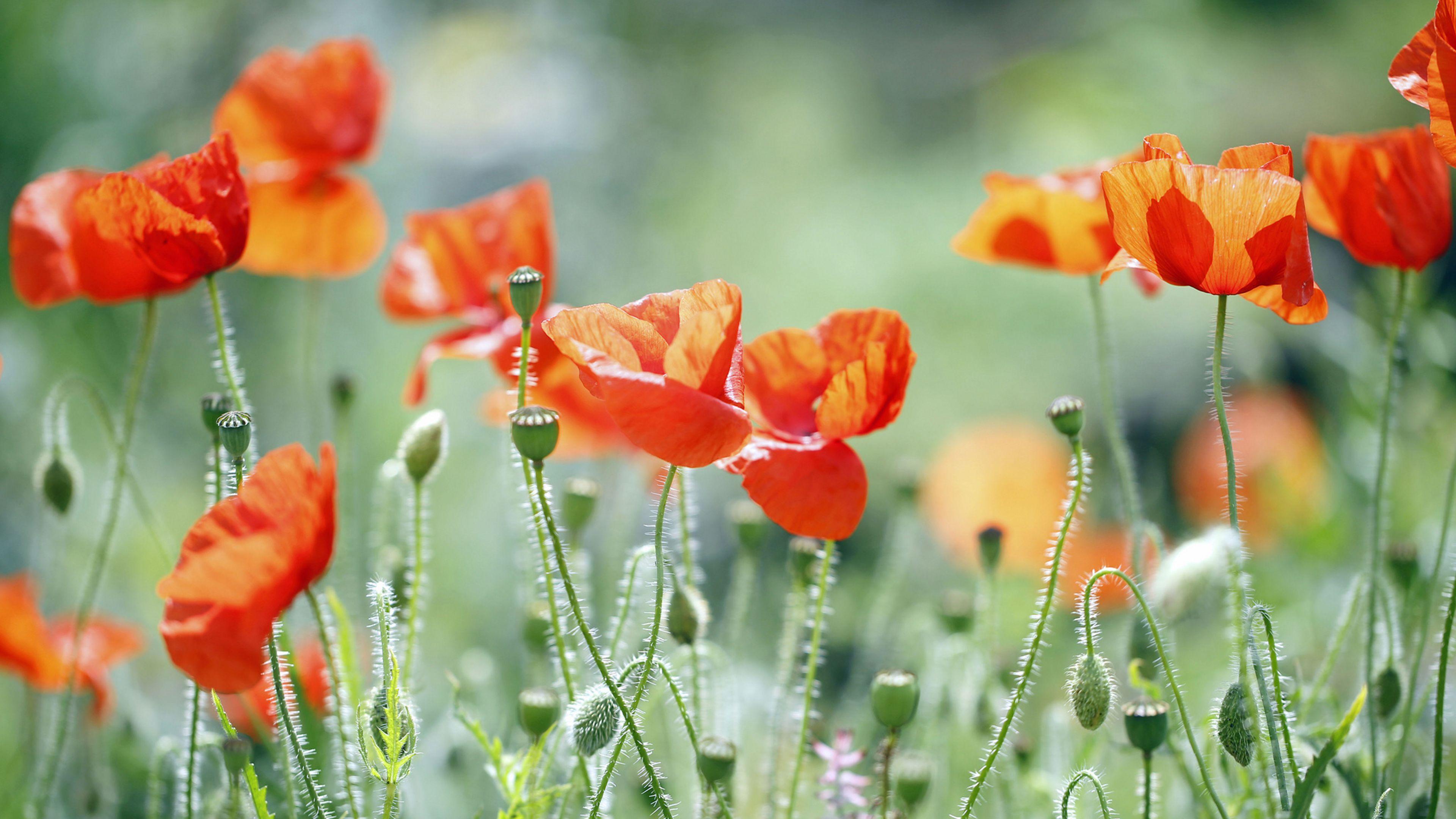 95d26295b469b49c254b41303abb3d1c Luxe De Fleurs De Jardin Des Idées