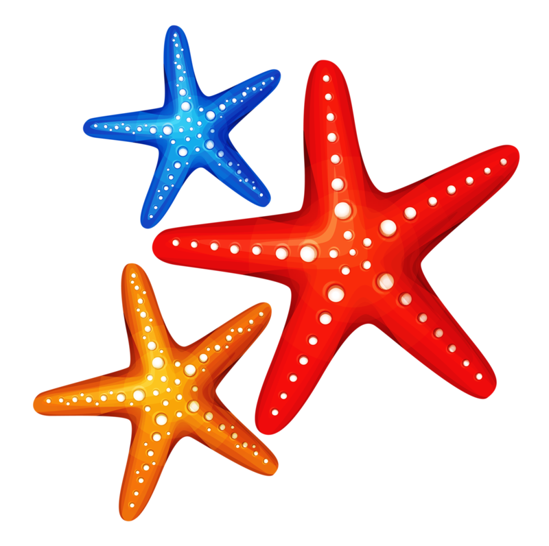 6 png ocean clip art and beach clipart rh pinterest ca starfish clip art images starfish clip art pictures