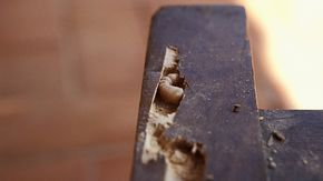 Holzwurm Erkennen Und Bekampfen Holzwurm Holz Holzwurmer Bekampfen