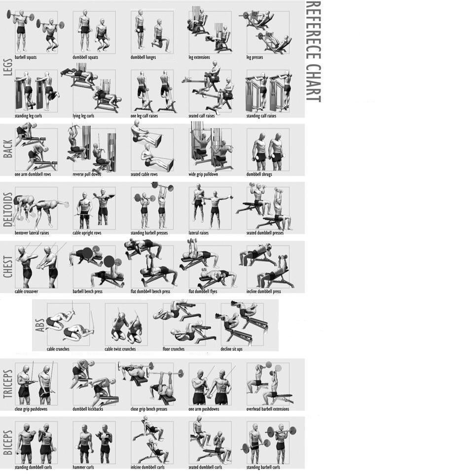 Pintrest Workouts Fitness: Weight Lifting Reference Chart