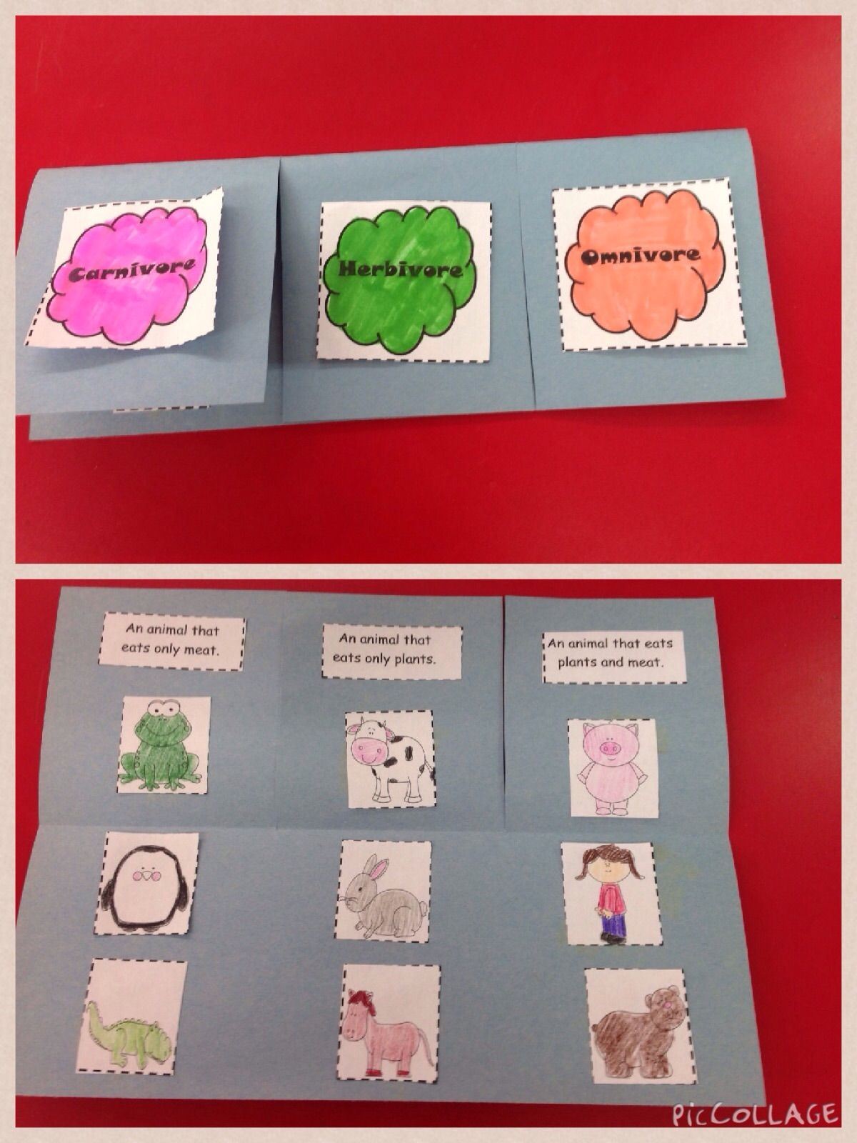 Carnivore Herbivore And Omnivore Foldable And Activities