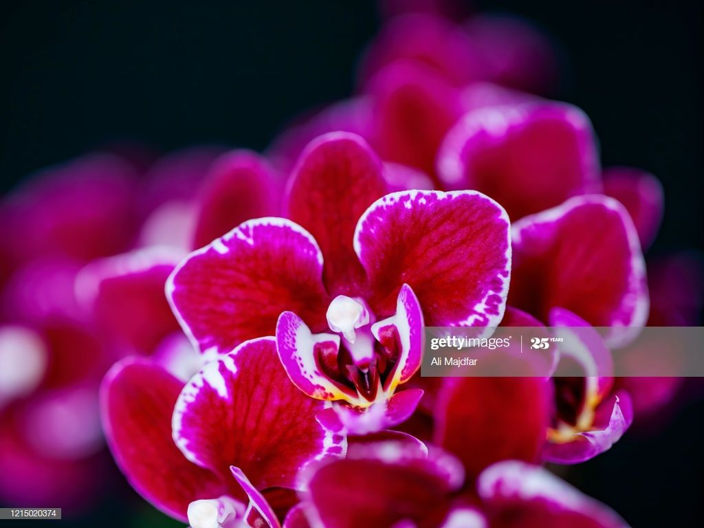 Orchid Flower In 2020 Orchid Flower Flowers Photography Orchids
