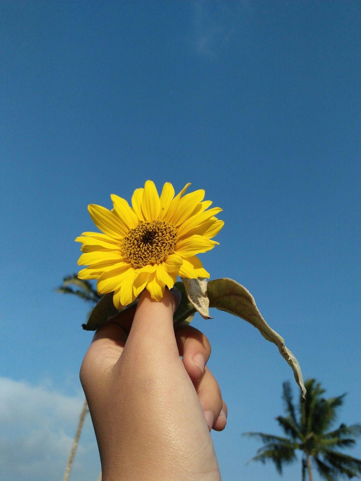 Bunga Matahari Bunga Bunga Matahari Matahari