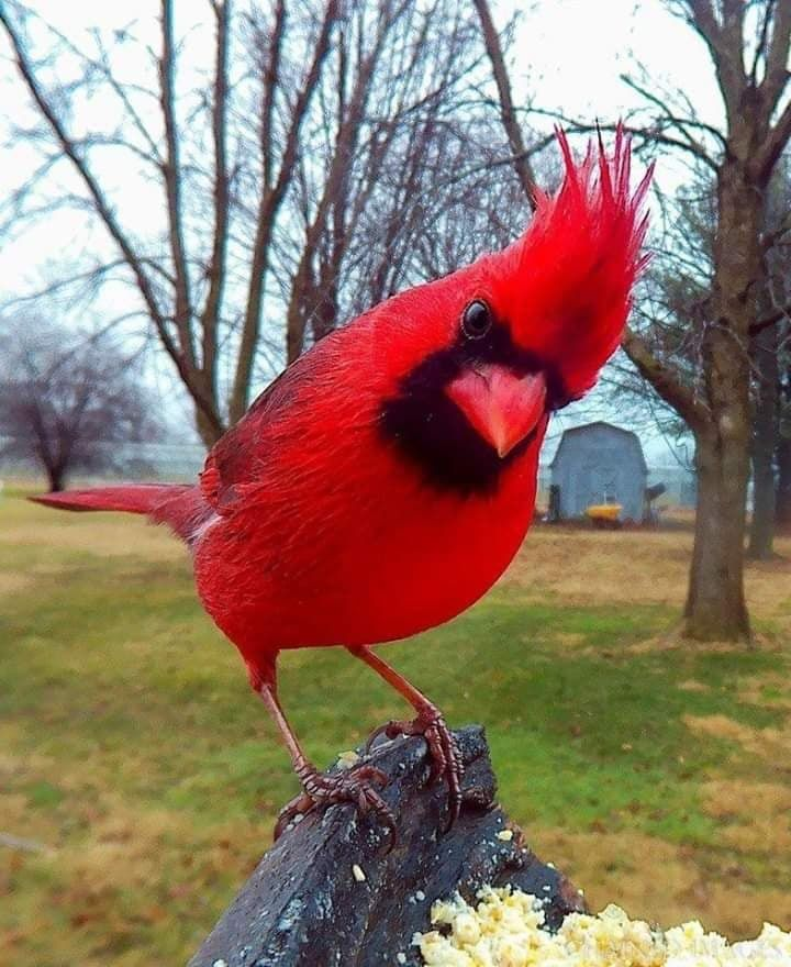16 Ideas De Pajarera 2 Pajarera Aves Fotos De Aves