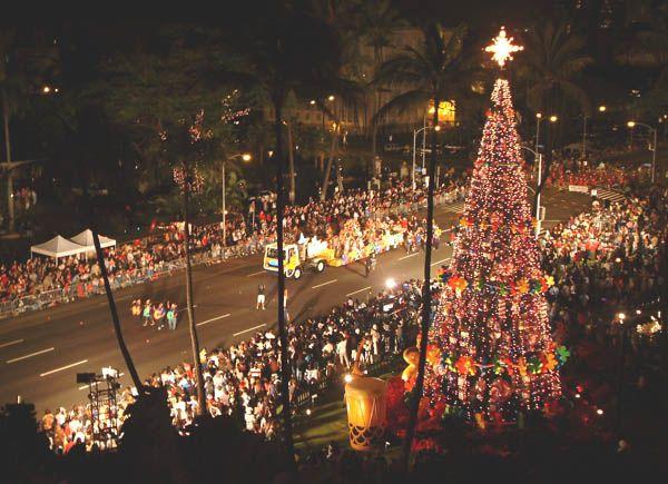 real christmas trees oahu