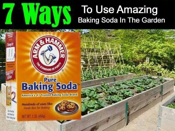 7 Ways To Use Baking Soda In The Garden Baking Soda Uses Plants
