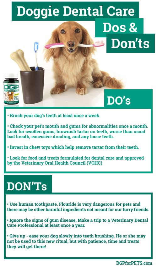 Doggie Dental Do S And Don Ts Infographic Dental Health Month