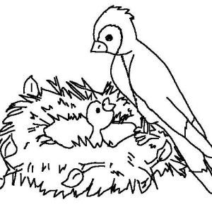 Oiseau Blue Coloriage Baby Coloring Pages Bird Coloring Pages Coloring Pages