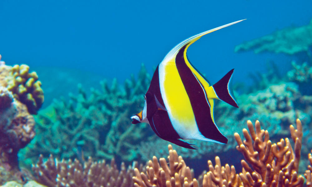 Best_Of_Indonesia_Angel_Fish_Travel_8.15.2012 Photos