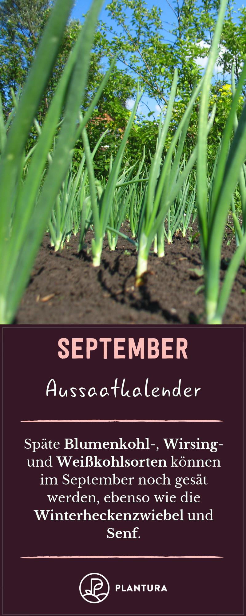 Aussaatkalender: Wann wird was ausgesät? #gemüsegartenanlegen