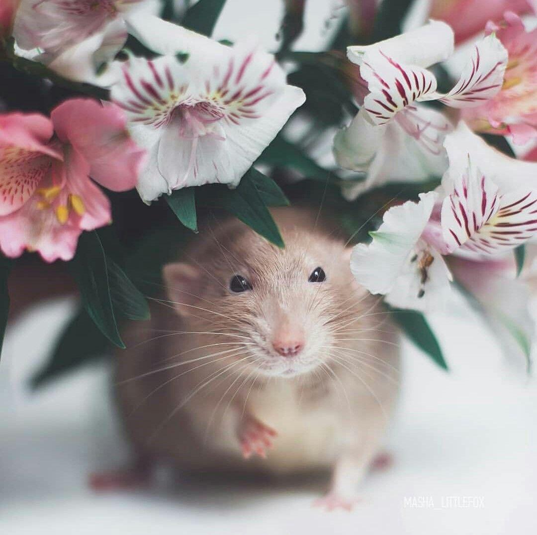 факту мышки картинки красивые юмор это