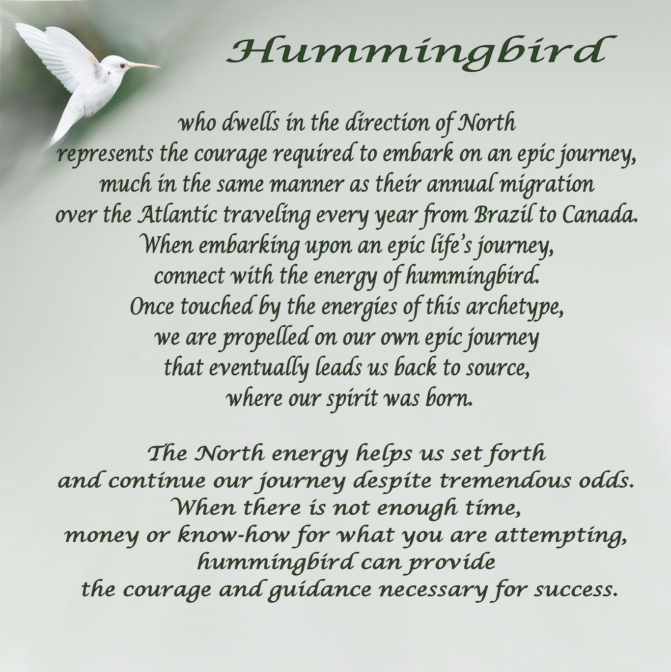 Animal Spirit Messenger Images Year Of The Hummingbird A