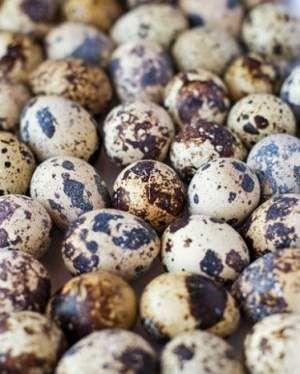 Ouă de prepeliță pentru varice