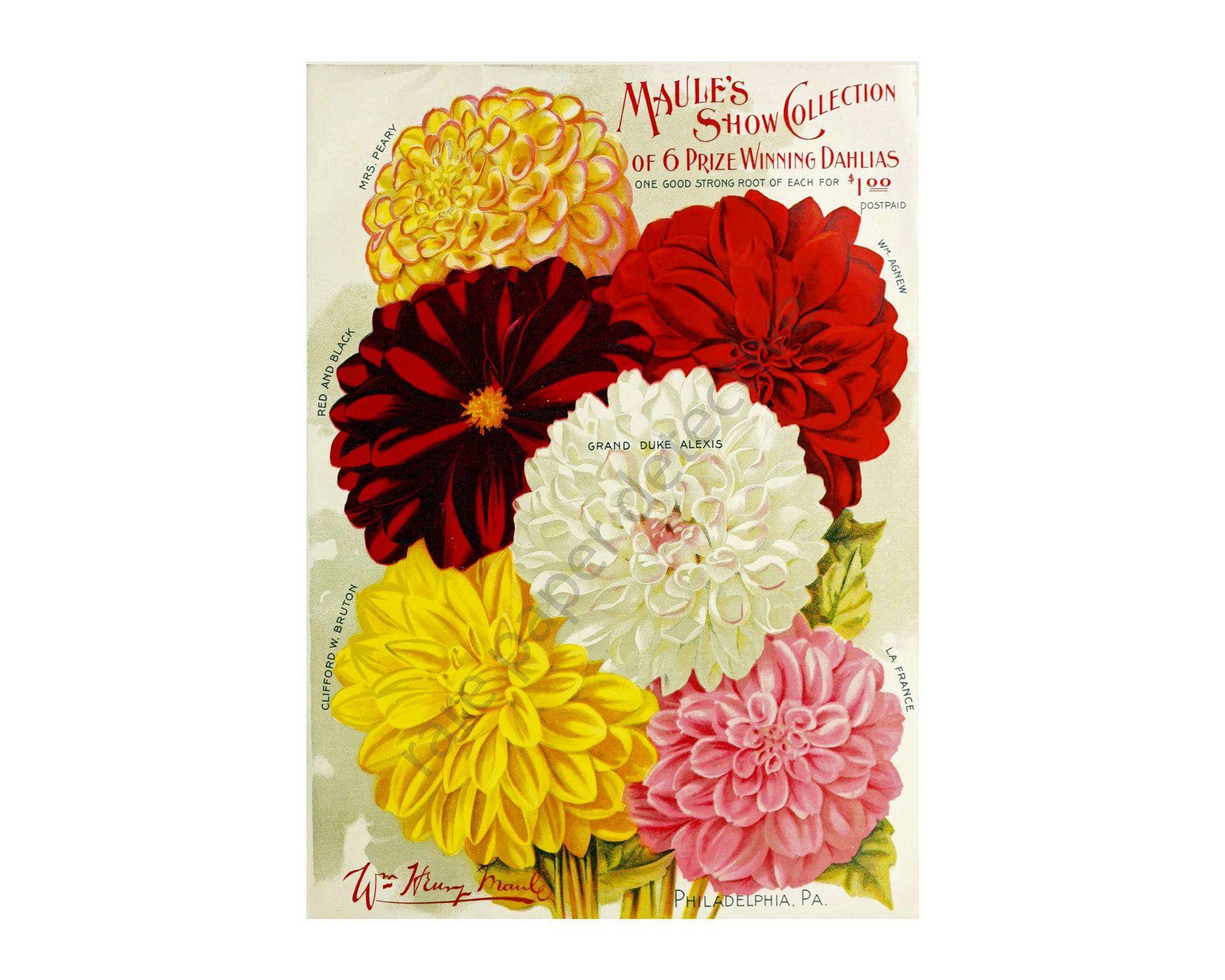 Antique Victorian Era Flower Garden Seed Catalog Print, 5 x 7, 1901 ...
