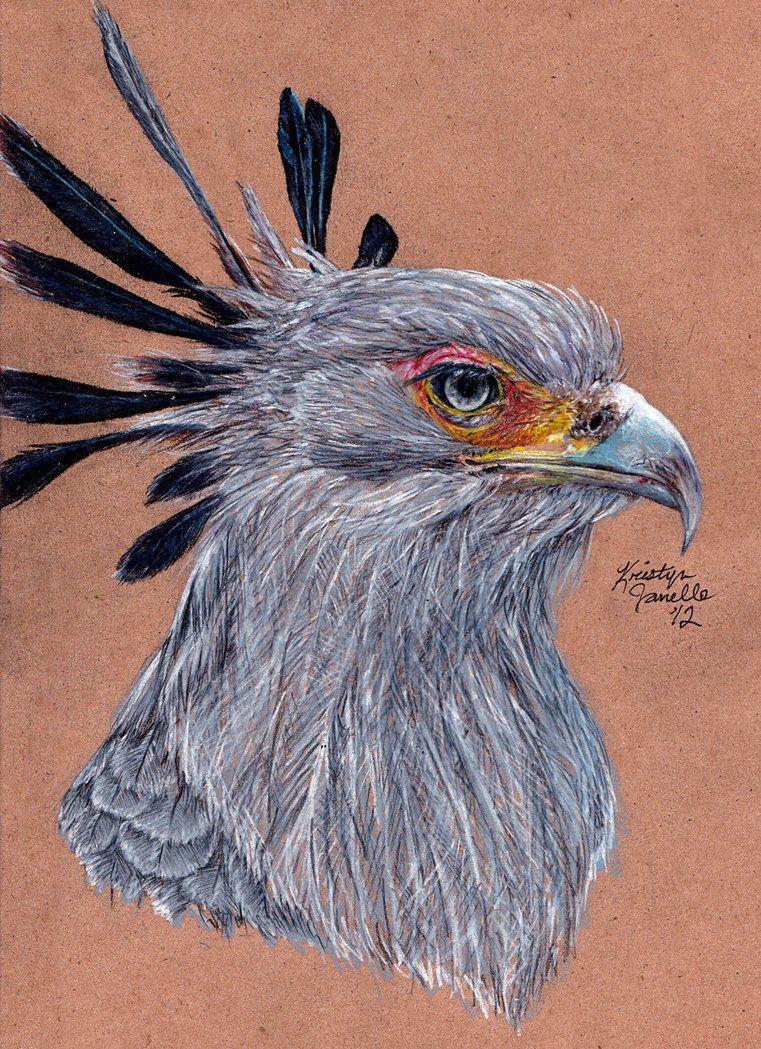 Secretary Bird by Kristyn Janelle on DeviantArt