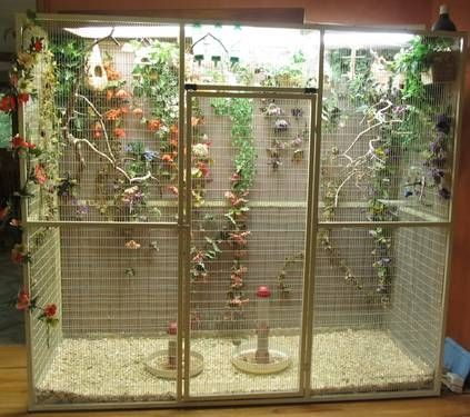 setting up finch flight cage - Yahoo Image Search Results ...