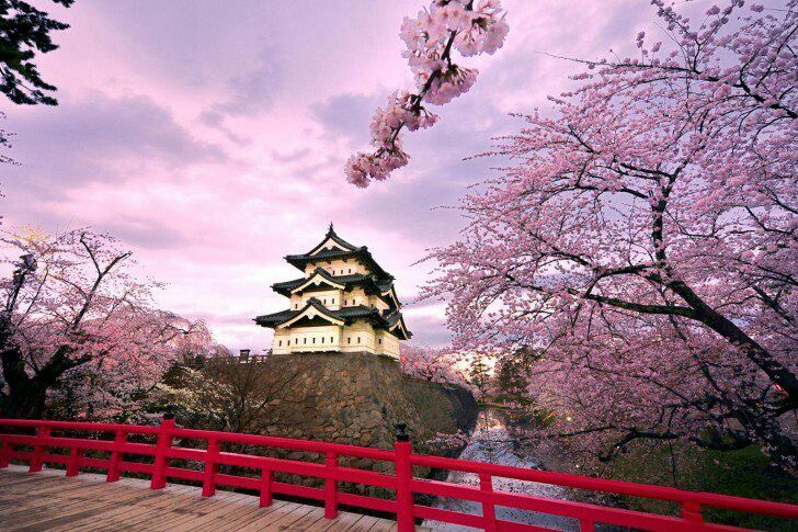 Pink Cherry Blossoms And Red Railing Castle Background Japanese Castle Hirosaki Japan Travel
