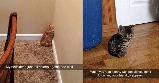 Cuteness Overload Tiny Kitten Snaps (15 Snaps)
